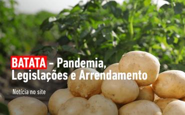BATATA – Pandemia, Legislações e Arrendamento