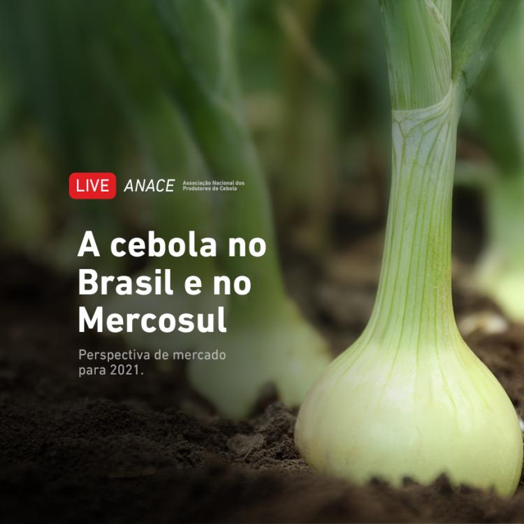O que esperar da safra de cebola 2021/2022 no Brasil e no Mercosul?