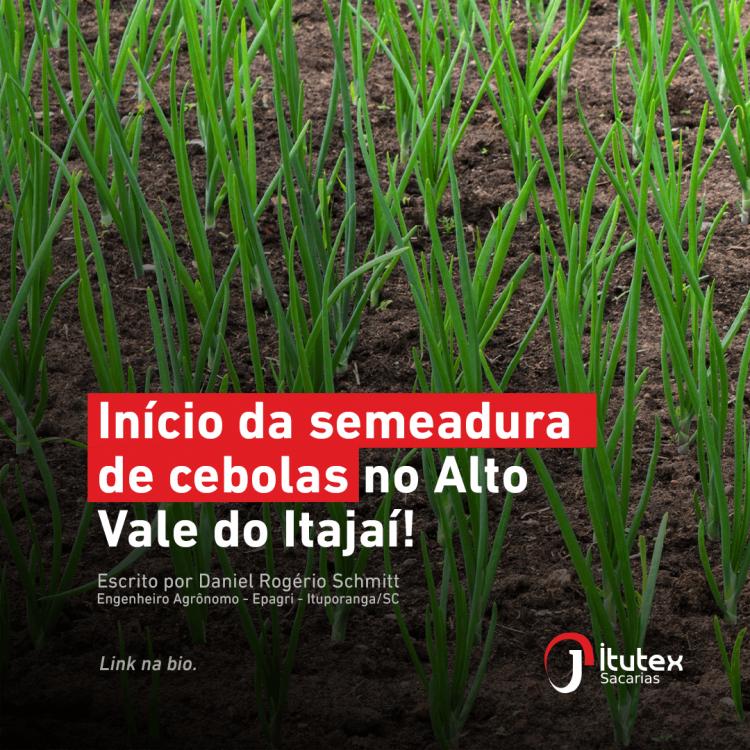 Início da semeadura de cebolas no Alto Vale do Itajaí!